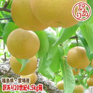 福島県 萱場産 訳アリ 20世紀 梨 4.5kg箱  (9〜20玉)