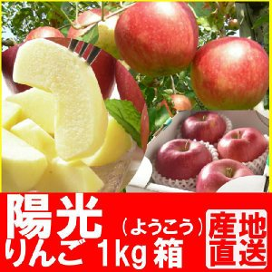 福島県産 陽光 リンゴ 1kg箱 (4〜5玉入) fukushimasan