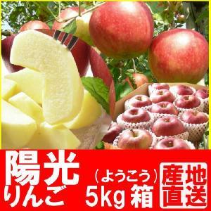 福島県産 陽光 リンゴ 5kg箱 (12〜18玉入) 「ふくしまプライド。体感キャンペーン(果物/野菜)」 fukushimasan