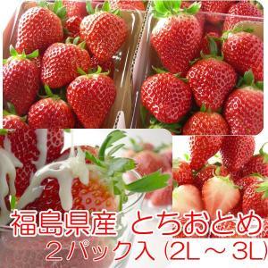 とちおとめ いちご イチゴ 2パック入 2L〜3L|fukushimasan