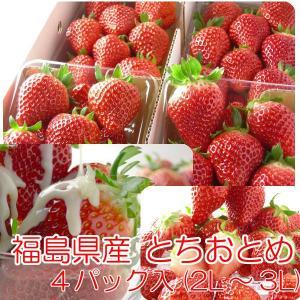 とちおとめ いちご イチゴ 4パック入 2L〜3L|fukushimasan