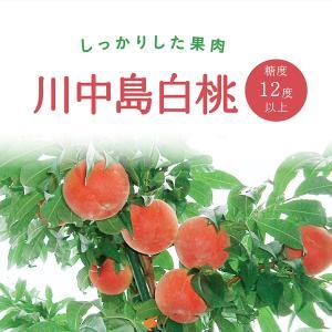 ふくしまプライド。体感キャンペーン(果物/野菜) 福島県旧盆後に収穫される桃で「あかつき」に次ぐ代表...