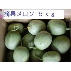 摘果メロン5kg【北海道 農家直送】|furano-kanofarm