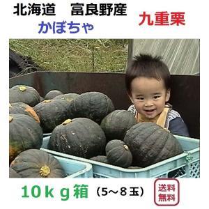 富良野産 カボチャ 九重栗 10kg箱(5〜6玉入)|furano-kanofarm