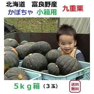 富良野産 カボチャ 九重栗 5kg箱 (3玉入り)|furano-kanofarm