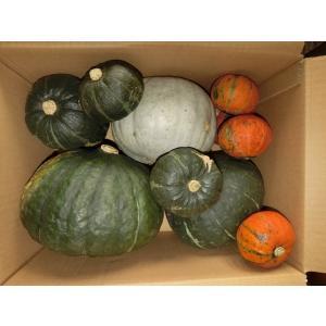 カボチャ 詰め合わせ 10kg箱|furano-kanofarm