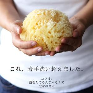 送料無料 天然海綿  ベリーニ (ハニコム種)スポンジ 高品質ボディスポンジ スポンジ 乾燥肌 アトピー|furo|02