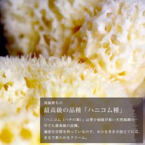 送料無料 天然海綿  ベリーニ (ハニコム種)スポンジ 高品質ボディスポンジ スポンジ 乾燥肌 アトピー|furo|04