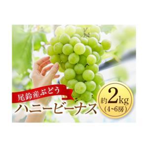 ふるさと納税 Aa80 ぶどう『ハニービーナス』約2kg(4〜6房) 宮崎県都農町|furunavi