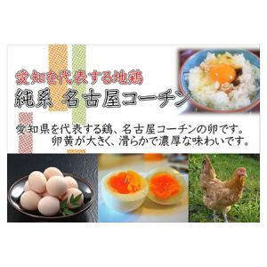 ふるさと納税 日本三大地鶏!! 本当に美味しい食べ物は調味料の味に負けません!「純系 名古屋コーチンの卵」(30個) 愛知県大府市|furunavi