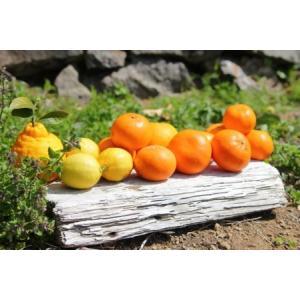 ふるさと納税 主井農園 季節のこだわりみのりセットご家庭用7kg 和歌山県湯浅町