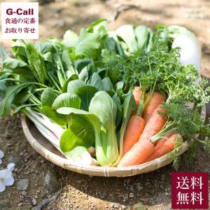 高知 山下農園 旬の野菜おまかせセット 無農薬 化学肥料不使用 有機 オーガニック