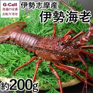伊勢志摩魚屋 山藤 伊勢志摩産 伊勢海老 約200g(1尾)