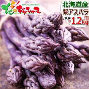 【予約】アスパラガス 北海道産 パープルアスパラ 1.2kg (共撰/秀品/S-Mサイズ混合) 紫 アスパラ パープルアスパラガス ギフト 野菜 グルメ 取り寄せ