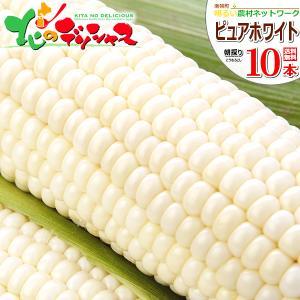 【予約】 とうもろこし ピュアホワイト 10本入り(南幌町明...