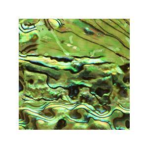 SHAREYDVA シャレドワ ネイルシール シェルシール グリーン 【ネコポス対応】 ネイル用品の専門店 ネイル シール プロ用にも|g-nail