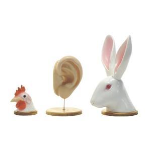 耳の比較模型 MY-3C gakurin