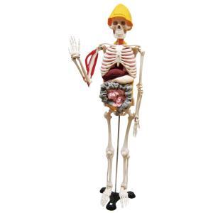 人体模型 筋臓くん gakurin