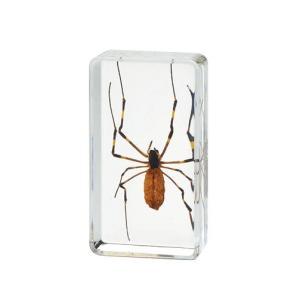 プラスチック封入クモ標本