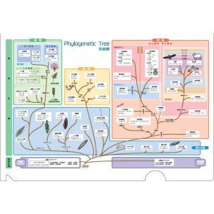 クリアファイル(系統樹)|gakusan