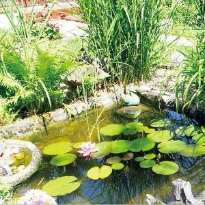 池 かご/ 池用植物カゴ 丸小 IB-14/水...の詳細画像2