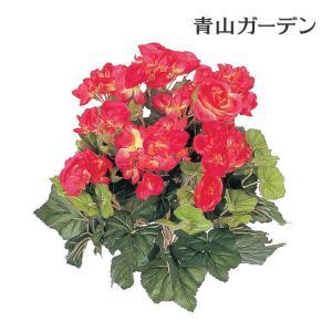 人工植物 造花/ベゴニア レッド/GN-34R/フェイクグリーン/ディスプレイ/飾り|garden