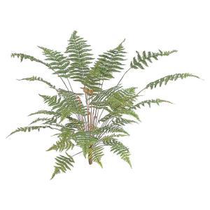 人工植物 造花/ベニシダ 大/GN-41L/フェイクグリーン/ディスプレイ/飾り|garden