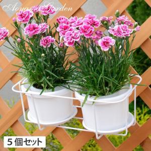 プラントホルダー ダブル(小)ホワイト 5個セット/NPM-PH4SW|garden