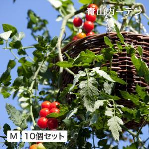 10個セット/ラタンハンギングバスケットM|garden