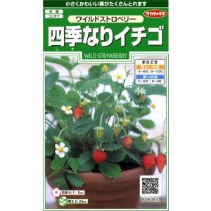 【種子】四季なりイチゴ サカタのタネ