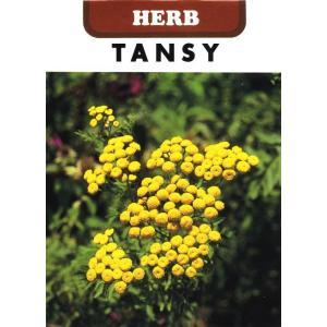 ジンジャープランツ、ビターボタン、センティッドファーンとも呼ばれるキク科の多年草です。 和名をヨモギ...
