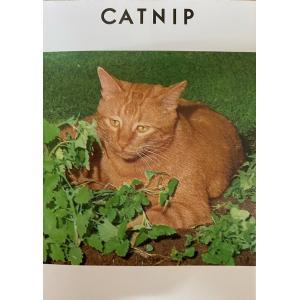 ハーブの仲間でキャットミント、イヌハッカとも呼ばれます。 ネコが好きな香りを持っているハーブで、実際...