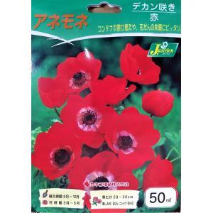 【花球根】 アネモネ デカン咲き 赤 50ml入り
