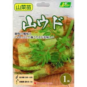 【野菜球根】 山ウド 1株入 カネコ種苗