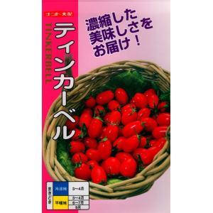 【種子】 紫トマト 藤田種子
