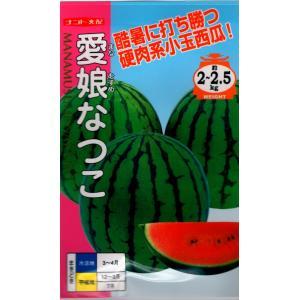 【輸入種子】ミニカボチャ プチオレンジ2号 藤田種子のタネ