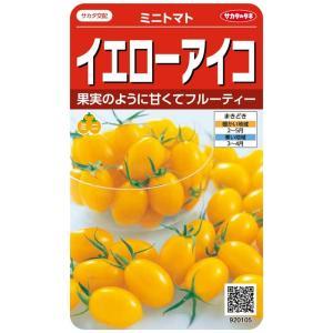 【種子】 ミニトマト イエローアイコ サカタのタネ