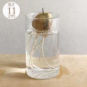 球根 栽培 フラワーベース 球根用 花瓶 ガラス 水耕栽培 ガラスベース 高さ11cm gardenyouhin