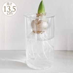 球根 栽培 フラワーベース 球根用 花瓶 ガラス 水耕栽培 ガラスベース 高さ13.5cm gardenyouhin