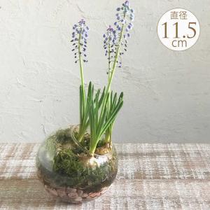 球根 栽培 フラワーベース 球根用 花瓶 ガラス 水耕栽培 ガラスベース ラウンドドーム|gardenyouhin