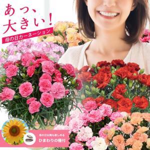 母の日 2018 カーネーション  5号 鉢花 ギフト 送料...