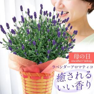 母の日 ギフト 2018 花 鉢植え ラベンダー アロマティ...