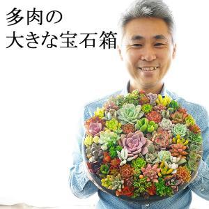 色とりどりの多肉植物をギュッと詰め込んだ、鮮やかな贈り物です! こんな豪華で素敵な多肉ちゃんの寄せ植...