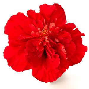 送料無料 よく咲く長く咲くハイビスカス 鉢植え 5号鉢 メデューサ 八重 1鉢 同梱4鉢まで対応中! ヒビスカス【take】|gekihana