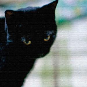 猫 アートパネル ANIMAL Sサイズ 15cm×15cm lib-4122810s2|genco1