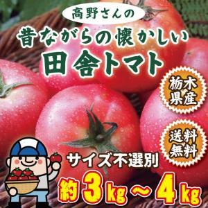 トマト 訳あり 高野さん益子さんの昔ながらの懐かしい田舎トマ...