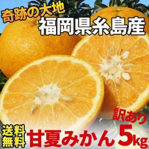 訳あり甘夏5kg(送料無料)福岡県糸島産の新鮮くだもの あま...