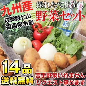 九州野菜セット 新鮮やさい詰め合せ14品 (クール便送料無料...