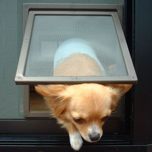 ペットドア 網戸用 くぐりゃんせ ブラウン (犬・猫 ドア)|get-square