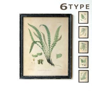 ファーンプランツの レトロな標本の細密画が6タイプ  細密画は印刷で アンティークな雰囲気がいっぱい...